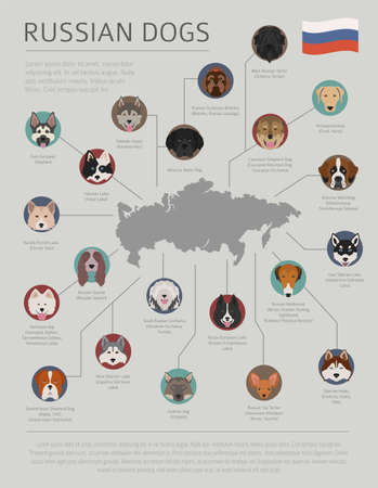Dogs by country of origin. Russian dog breeds. Infographic template. Vector illustration Vettoriali