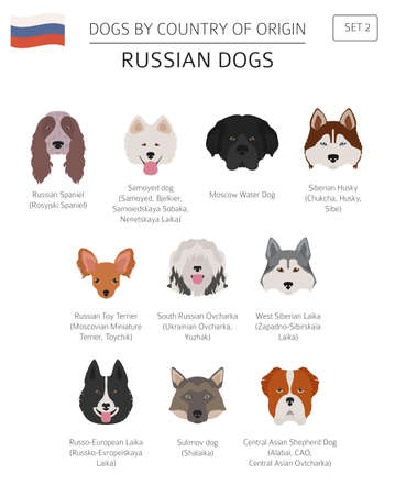 Dogs by country of origin. Russian dog breeds. Infographic template. Vector illustration Illustration