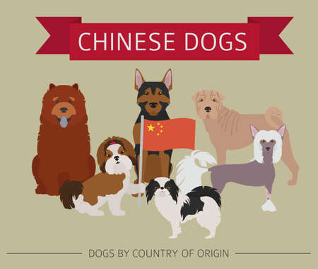 Dogs by country of origin. Chinese dog breeds. Infographic template. Vector illustration Иллюстрация