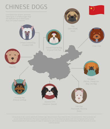 Dogs by country of origin. Chinese dog breeds. Infographic template. Vector illustration Reklamní fotografie - 101096951