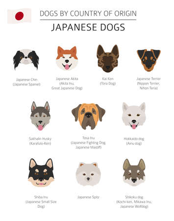 Dogs by country of origin. Japanese dog breeds. Infographic template. Vector illustration 矢量图像