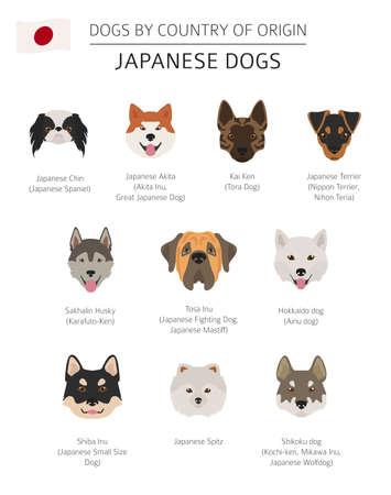 Perros por país de origen. Razas de perros japoneses. Plantilla de infografía. Ilustración vectorial