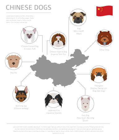 Dogs by country of origin. Chinese dog breeds. Infographic template. Vector illustration Ilustrace