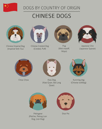 Dogs by country of origin. Chinese dog breeds. Infographic template. Vector illustration Illusztráció