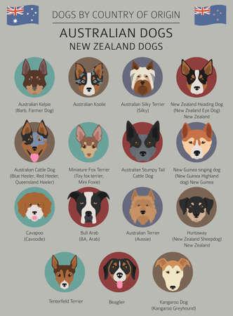 Perros por país de origen. Razas de perros australianos, perros de Nueva Zelanda. Plantilla de infografía. Ilustración vectorial