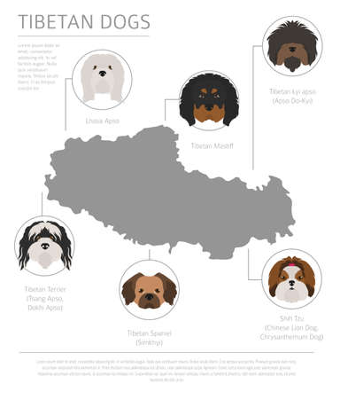 Dogs by country of origin. Tibetan dog breeds, chinese mountain dogs. Infographic template. Vector illustration Ilustrace