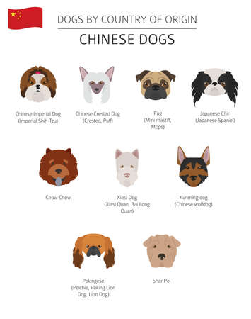Dogs by country of origin. Chinese dog breeds. Infographic template. Vector illustration Reklamní fotografie - 101097178