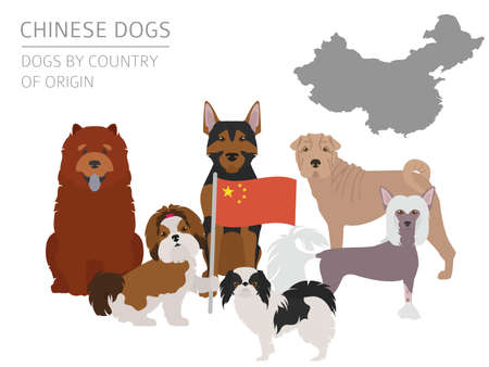 Dogs by country of origin. Chinese dog breeds. Infographic template. Vector illustration Illustration