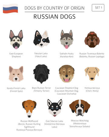 Dogs by country of origin. Russian dog breeds. Infographic template. Vector illustration  イラスト・ベクター素材