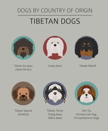 Dogs by country of origin. Tibetan dog breeds, chinese mountain dogs. Infographic template. Vector illustration Illustration