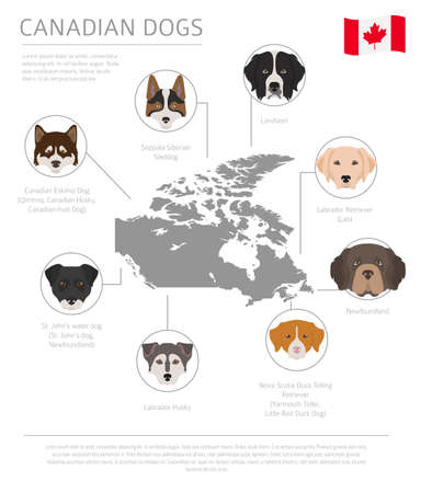 Dogs by country of origin. Canadian dog breeds. Infographic template. Vector illustration