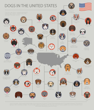 Dogs in the United States. American dog breeds. Infographic template. Vector illustration