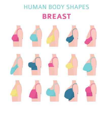 Human body shapes. Woman form set. Bra types. Vector illustration