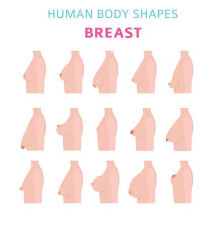 Human body shapes. woman breast form set. Vector illustration
