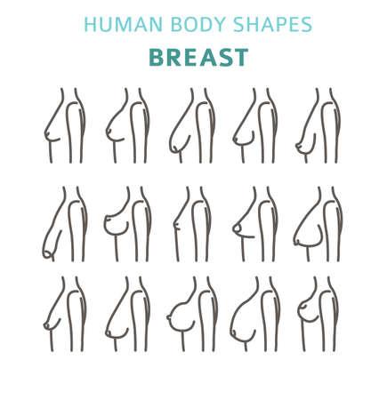 Formas del cuerpo humano. conjunto de formas de mujer. Ilustración vectorial