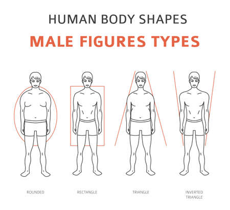 Human body shapes. Male figures types set. Vector illustration 向量圖像