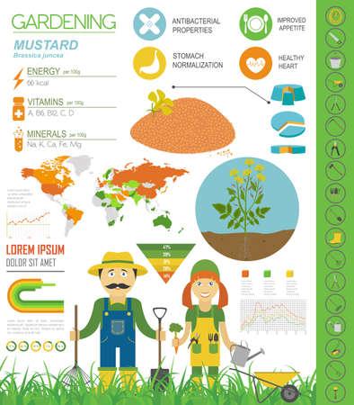 Senf vorteilhafte Funktionen Grafikvorlage. Gartenarbeit, Landwirtschaft Infografik, wie es wächst. Flaches Design. Vektor-Illustration