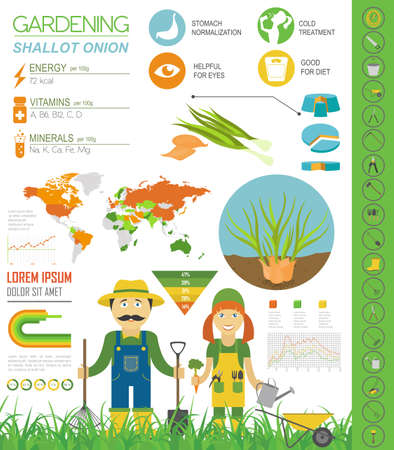 Shallot onion beneficial features graphic template. Gardening, farming infographic, how it grows. Flat style design. Vector illustration 向量圖像