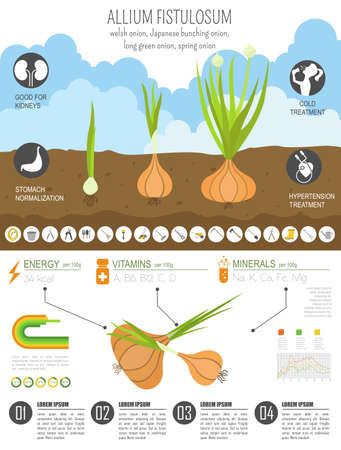 Welsh onion beneficial features graphic template. Gardening, farming infographic, how it grows. Flat style design. Vector illustration