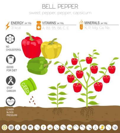 Paprika vorteilhafte Funktionen Grafikvorlage. Gartenarbeit, Landwirtschaft Infografik, wie es wächst. Flaches Design. Vektor-Illustration