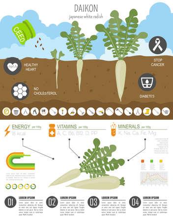 Daikon vorteilhafte Funktionen Grafikvorlage. Gartenarbeit, Landwirtschaft Infografik, wie es wächst. Flaches Design. Vektor-Illustration