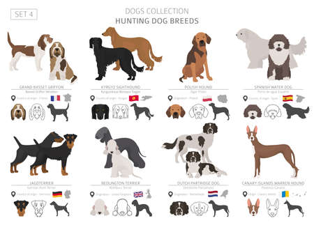 Hunting dogs collection isolated on white. Flat style. Different color and country of origin. Vector illustration Stock Vector - 126388701