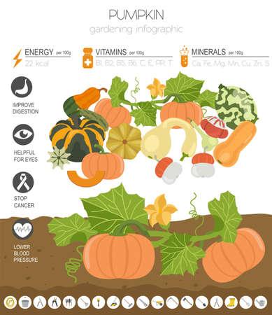 Kürbis vorteilhafte Funktionen Grafikvorlage. Gartenarbeit, Landwirtschaft Infografik, wie es wächst. Flaches Design. Vektor-Illustration