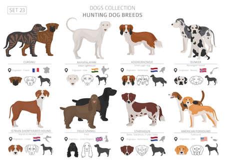 Colección de perros de caza aislado en blanco. Estilo plano. Diferente color y país de origen. Ilustración vectorial