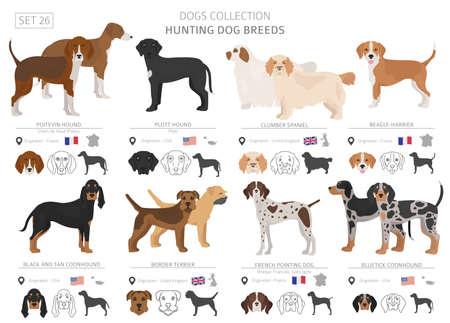 Accumulazione dei cani da caccia isolata su bianco. Stile piatto. Colore diverso e paese di origine. Illustrazione vettoriale Vettoriali