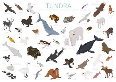 Toendra bioom. Isometrische 3D-stijl. Terrestrische ecosysteem wereldkaart. Arctische dieren, vogels, vissen en planten infographic ontwerp. vector illustratie