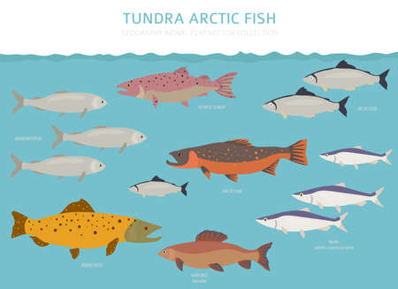 Tundra biome. Terrestrial ecosystem world map. Arctic fish infographic design. Vector illustration