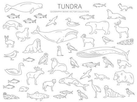 Toendra bioom. Eenvoudige lijnstijl. Terrestrische ecosysteem wereldkaart. Arctische dieren, vogels, vissen en planten infographic ontwerp. vector illustratie