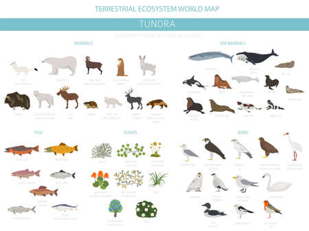 Tundra biome. Terrestrial ecosystem world map. Arctic animals, birds, fish and plants infographic design. Vector illustration