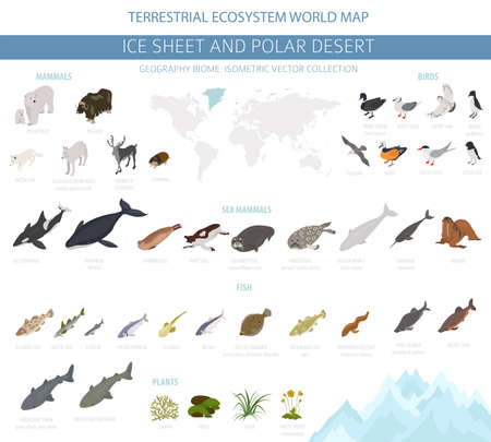 Ice sheet and polar desert biome. Isometric 3d style. Terrestrial ecosystem world map. Arctic animals, birds, fish and plants infographic design. Vector illustration Stock Illustratie