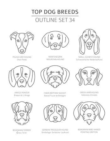 Top dog breeds. Hunting dogs set. Pet outline collection. Vector illustration