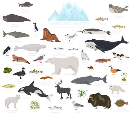 Ice sheet and polar desert biome. Terrestrial ecosystem world map. Arctic animals, birds, fish and plants infographic design. Vector illustration Stockfoto - 119691768