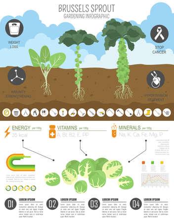 Rosenkohl-Kohl vorteilhafte Eigenschaften Grafikvorlage. Gartenarbeit, Landwirtschaft Infografik, wie es wächst. Flaches Design. Vektor-Illustration