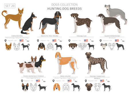 Hunting dogs collection isolated on white. Flat style. Different color and country of origin. Vector illustration