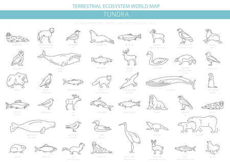 Tundra biome. Simple line style. Terrestrial ecosystem world map. Arctic animals, birds, fish and plants infographic design. Vector illustration Illustration