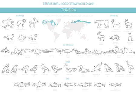 Tundra biome. Simple line style. Terrestrial ecosystem world map. Arctic animals, birds, fish and plants infographic design. Vector illustration Illusztráció