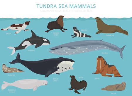 Biom tundry. Mapa świata ekosystemu lądowego. Projekt infografikę ssaków arktycznych morskich. Ilustracja wektorowa Ilustracje wektorowe