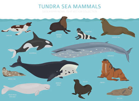 Tundra biome. Terrestrial ecosystem world map. Arctic sea mammals infographic design. Vector illustration