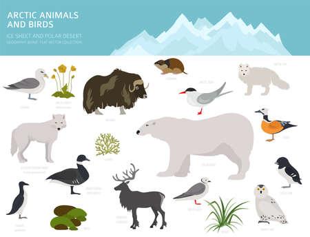 Eisschild und polares Wüstenbiom. Weltkarte des terrestrischen Ökosystems. Arktische Tiere, Vögel, Fische und Pflanzen Infografik-Design. Vektor-Illustration