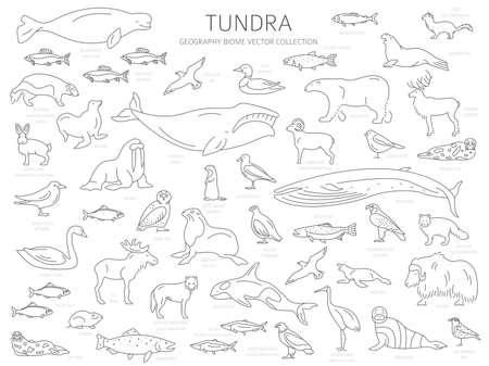 Toendra bioom. Eenvoudige lijnstijl. Terrestrische ecosysteem wereldkaart. Arctische dieren, vogels, vissen en planten infographic ontwerp. vector illustratie Vector Illustratie