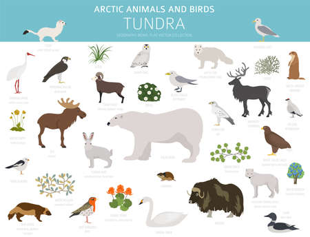 Tundra biome. Terrestrial ecosystem world map. Arctic animals and birds infographic design. Vector illustration