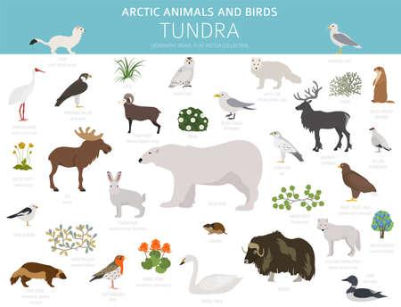 Tundra biome. Terrestrial ecosystem world map. Arctic animals and birds infographic design. Vector illustration