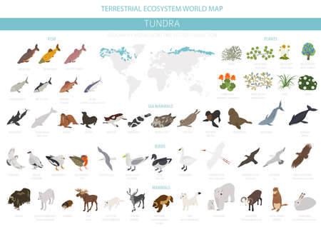 Tundra biome. Isometric 3d style. Terrestrial ecosystem world map. Arctic animals, birds, fish and plants infographic design. Vector illustration Illustration