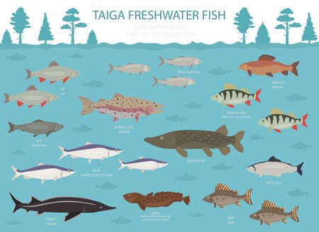 Taiga biome, boreal snow forest. Terrestrial ecosystem world map. Animals, birds, fish and plants infographic design. Vector illustration