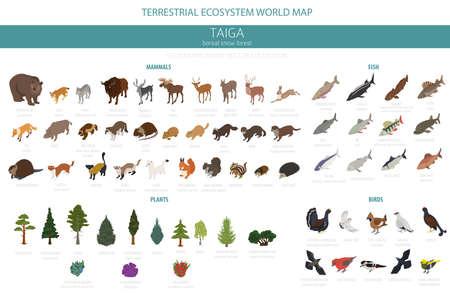Taiga bioma, foresta di neve boreale 3d isometria design. Mappa del mondo dell'ecosistema terrestre. Elementi infografici di animali, uccelli, pesci e piante. Illustrazione vettoriale