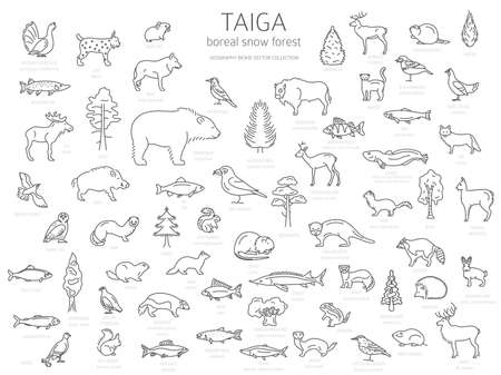 Taiga biome, boreal snow forest thin simple line design. Terrestrial ecosystem world map. Animals, birds, fish and plants infographic elements. Vector illustration